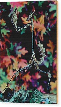 Indian Rose Mantis Gonglus Gongylodes Wandering Violin Mantis Full Body Closeup          Wood Print by Leslie Crotty