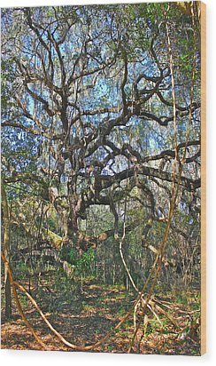 Wood Print featuring the photograph Virgin Forest by Cyril Maza