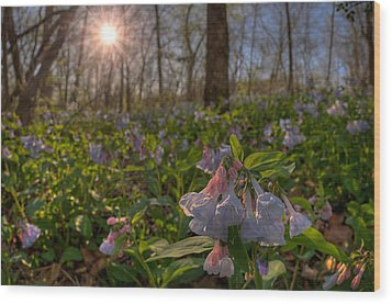 Virgina Bluebells Wood Print by Robert Charity