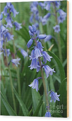 Wood Print featuring the photograph Virginia Blue Bells  by Eva Kaufman