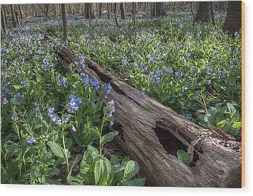 Virginia Bluebells Wood Print by Michael Donahue