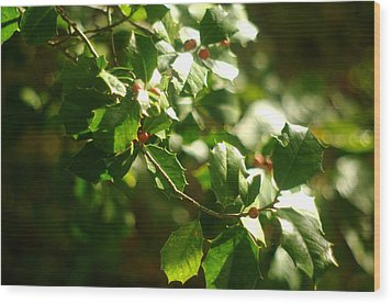 Wood Print featuring the photograph Virginia Holly Tree And Berries by Suzanne Powers