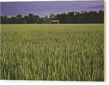 Virginia Wheat Field Wood Print