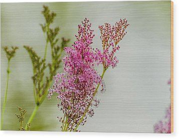 Vision In Pink Wood Print