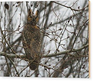 Visiting Owl Wood Print by Rebecca Adams