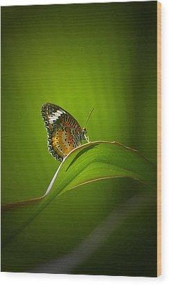Visitor Wood Print by Randy Pollard