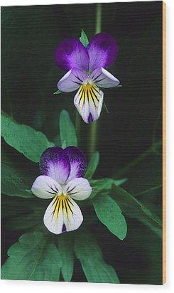 Vivacious Viola  Wood Print by Bijan Pirnia
