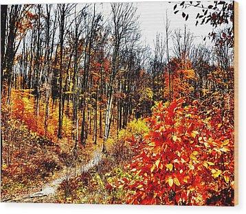 Vivid Pathway Wood Print