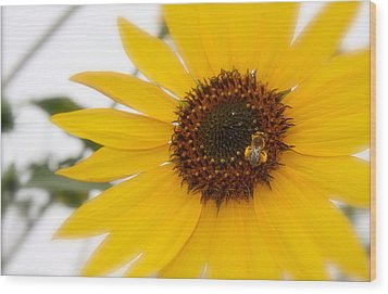 Wood Print featuring the photograph Vivid Sunflower With Bee Fine Art Nature Photography  by Jerry Cowart