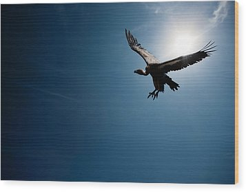 Vulture Flying In Front Of The Sun Wood Print by Johan Swanepoel