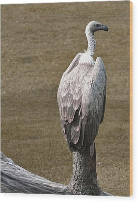 Vulture On Guard Wood Print