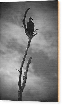 Wood Print featuring the photograph Vulture Silhouette by Bradley R Youngberg