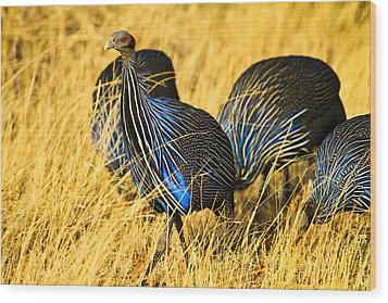 Vulturin Guineafowl Wood Print by Kongsak Sumano
