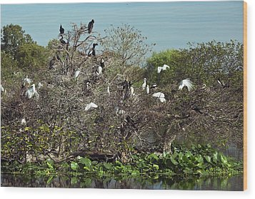 Wading Birds Roosting In A Tree Wood Print by Bob Gibbons