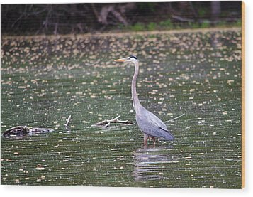 Wood Print featuring the photograph Wading Crane by Susan  McMenamin
