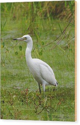 Wading Heron Wood Print