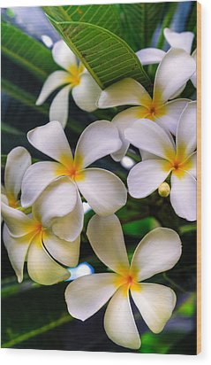 Wailea Plumerias Wood Print by Kelly Wade