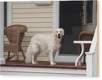 Waiting By The Door For You Wood Print by John Rizzuto