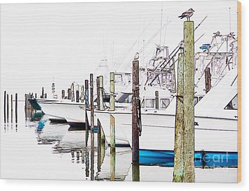 Waiting For Food - Outer Banks Wood Print by Dan Carmichael