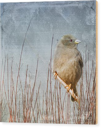 Waiting For Spring Wood Print by Elaine Manley