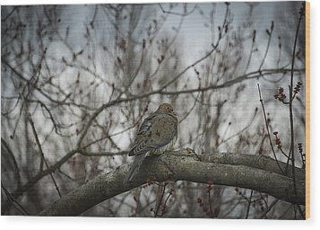 Wood Print featuring the photograph Waiting On Spring by Phil Abrams