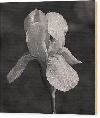 Waiting On The Iris Wood Print by Mamie Thornbrue