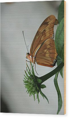 Wood Print featuring the photograph  Butterfly Waiting On The Wind  by Cathy Harper