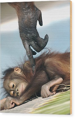 Wakeup Little One Wood Print by Sue Cullumber