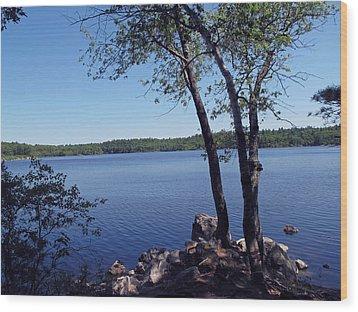Walden Pond Saugus Ma Wood Print by Barbara McDevitt