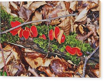 Walk In The Woods Wood Print by Aidan Moran