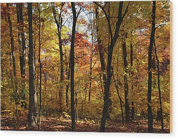 Wood Print featuring the photograph Walk In The Woods by Harold Rau