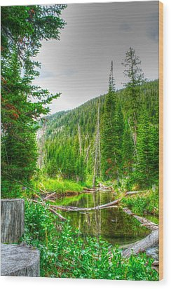 Wood Print featuring the photograph Walk In The Woods by Kevin Bone