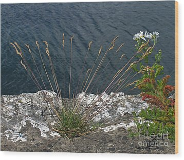 Wood Print featuring the photograph Flowers In Rock by Brenda Brown