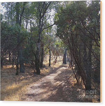 Walking Trail Wood Print