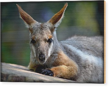 Wood Print featuring the photograph Wallaroo 2 by Amanda Vouglas
