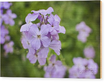 Wallflowers Get Attention Wood Print by Maria Janicki