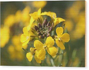 Wallflowers Wood Print by Mark Severn
