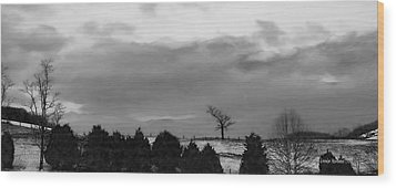 Walnut Tree In Bw Wood Print