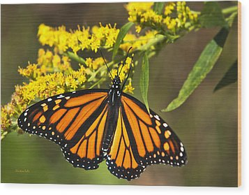 Wandering Migrant Butterfly Wood Print by Christina Rollo