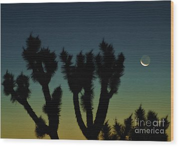 Wood Print featuring the photograph Waning by Angela J Wright