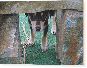 Wannabe Sled Dog In The Yukon Wood Print