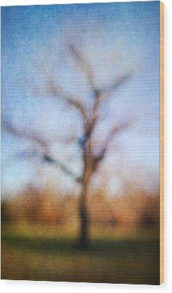 Warner Park Tree Wood Print by David Morel