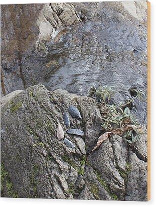 Warrior Crossing  Wood Print by Tim Rice