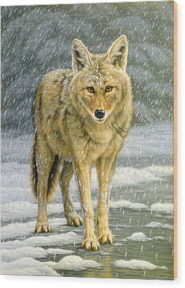 Wary Approach - Coyote Wood Print by Paul Krapf