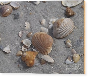 Washed Up On The Beach Wood Print by Brigitte Emme