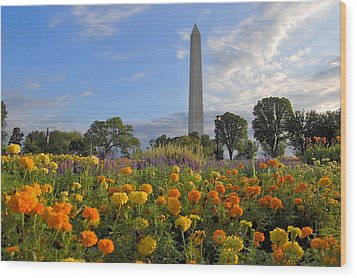 Wood Print featuring the photograph Washimgtom Monument In Spring by Michael Donahue