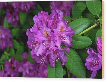 Washington Coastal Rhododendron Wood Print