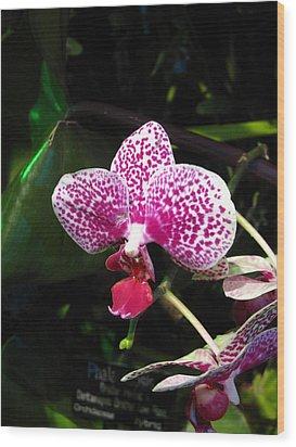 Washington Dc - Us Botanic Garden. - 12121 Wood Print by DC Photographer