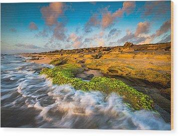 Washington Oaks State Park Coquina Rocks Beach St. Augustine Fl Beaches Wood Print by Dave Allen