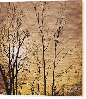 Washington's Winter Sky Wood Print by MaryJane Armstrong